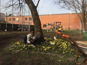 Frühblüher im Schulgarten